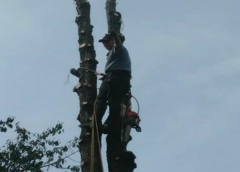 York Tree Service