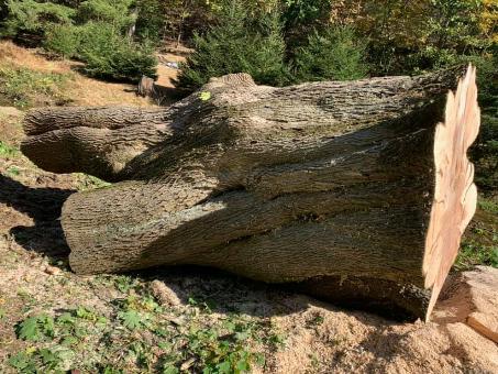 lenoir tree removal