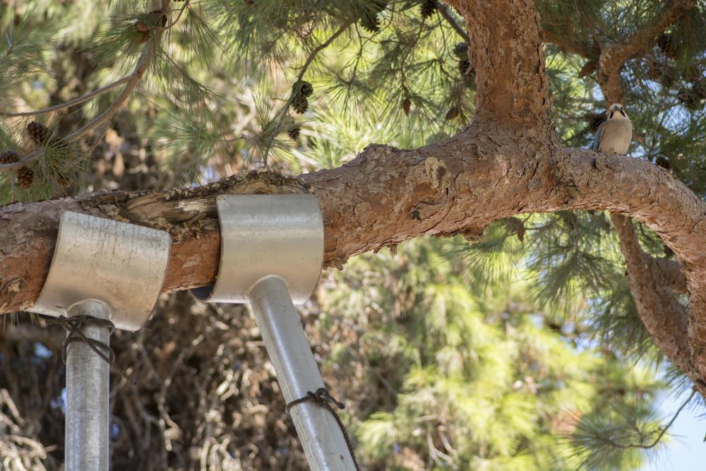 Warner Bros Tree Cabling and Bracing