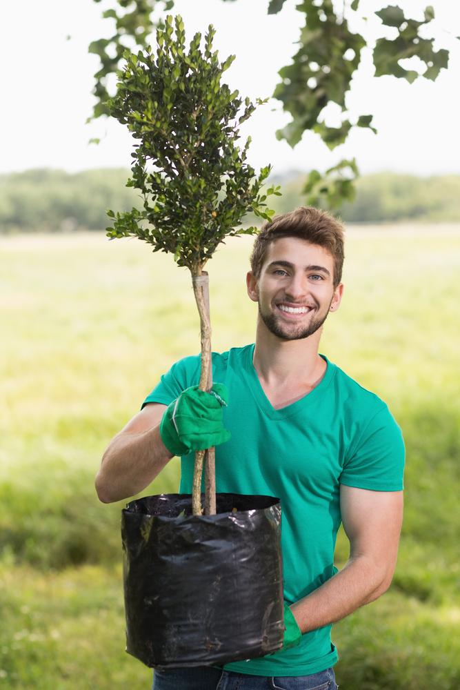 Warner Bros Tree Transplanting Services